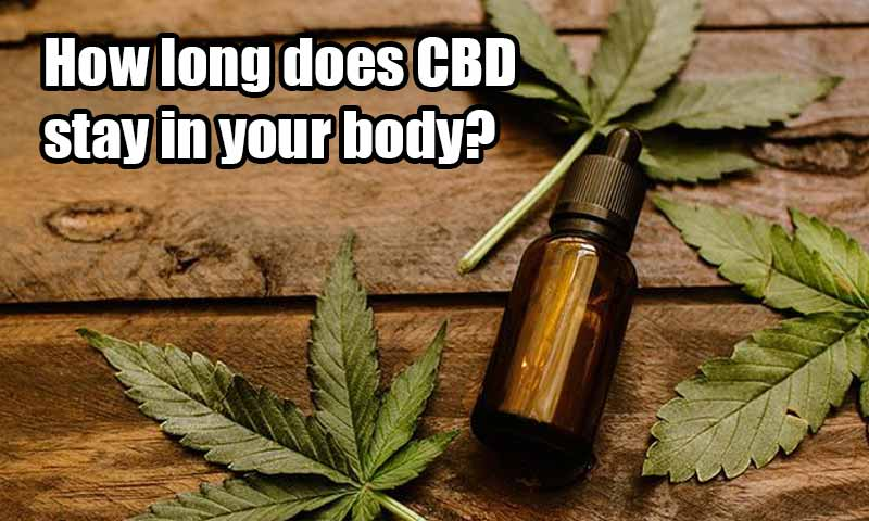 How long does CBD stay in your body?